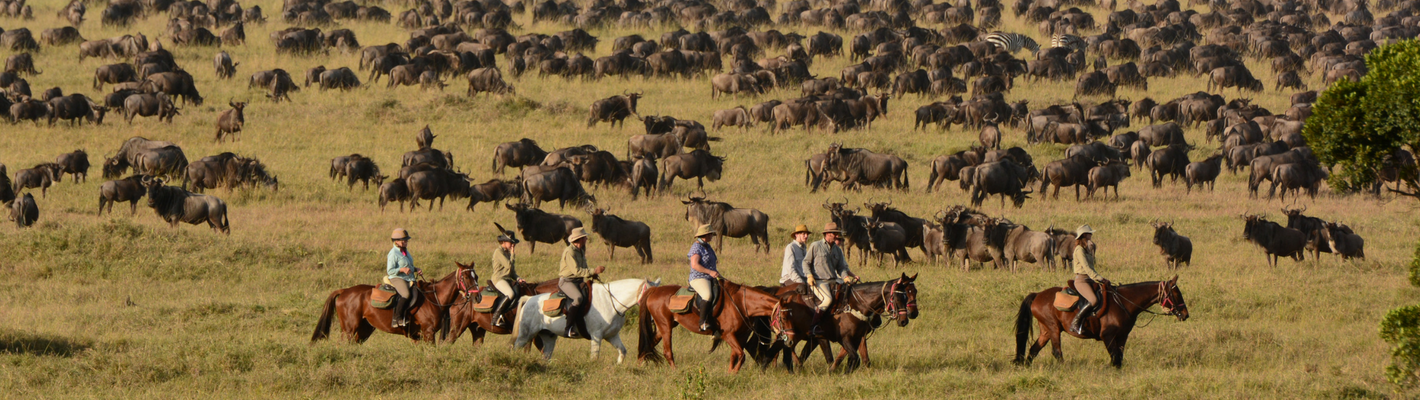 Wildebeest Migration in the Maasai Mara on horseback with Safaris Unlimited Africa, Kenya