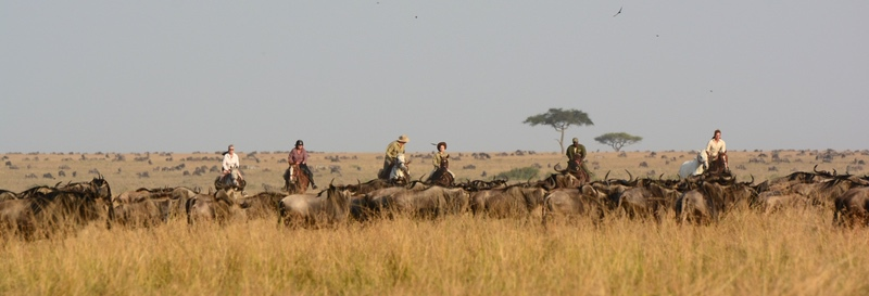 Wildebeest Migration and Horseback Riding with Safaris Unlimited