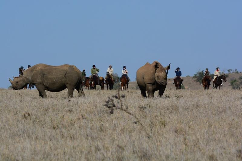 Rhino and riders on safari with Safaris Unlimited Africa in Kenya