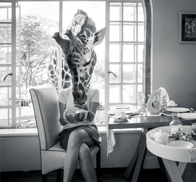 Feeding time at Giraffe Manor, Nairobi, Kenya with Safaris Unlimited Africa