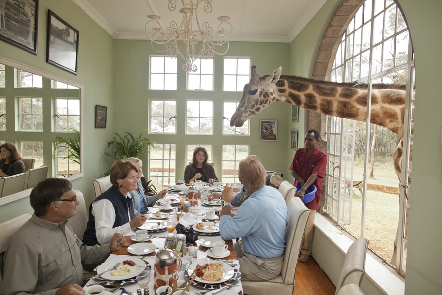 Safaris Unlimited Africa - Giraffe Manor - breakfast with giraffes