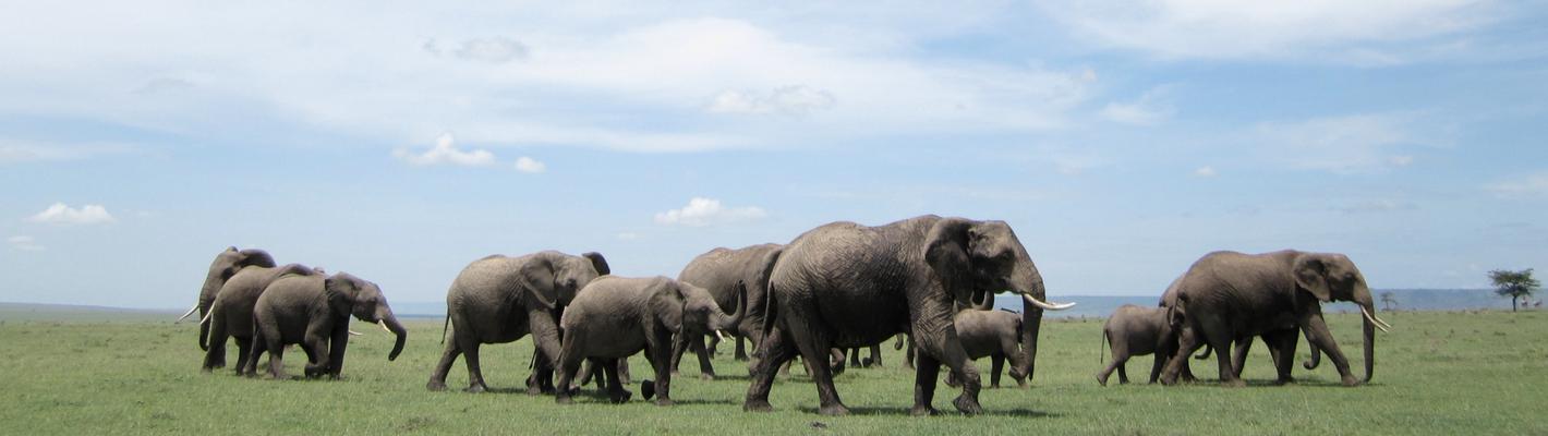 Safaris Unlimited - Wildlife Africa Elephants
