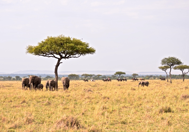 Riding Alongside Elephants in Kenya, Africa with Safaris Unlimited