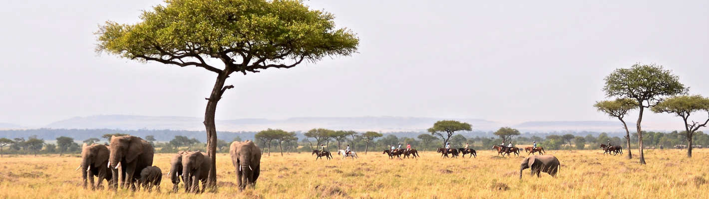 Safaris Unlimited Horseback Safari Africa Kenya with Elephants