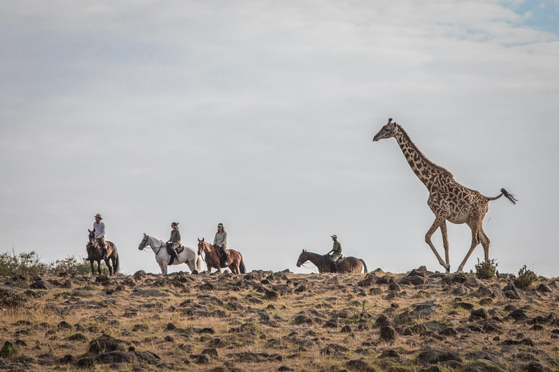Giraffe Running with Horses in the Background - On Safari with Safaris Unlimited Africa in Kenya