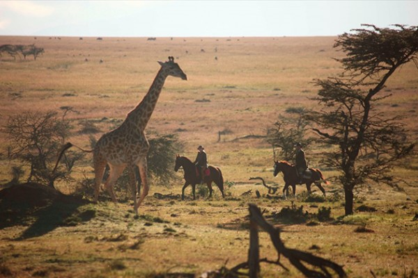 Horseback Safaris, Wildlife, Kenya, Africa, Giraffe, Safari, Gordie Church, Safaris Unlimited