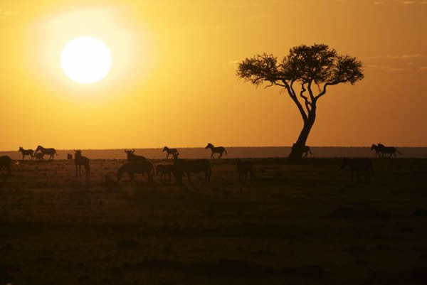 Sunset in Africa, Africa, Sunset, Safari, Savannah, Maasai Mara, Masai Mara, Horseback Safari, Wildlife Safari, Safaris Unlimited