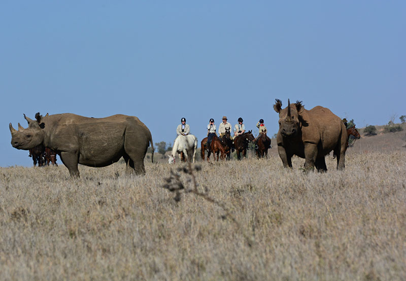 Safari, Africa, Kenya, Rhinocerous, Rhino, Endangered Species, Riding, Wildlife, Safaris, Horseback Safari, Safaris Unlimited